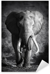 Sticker Pixerstick Elephant Bull (traitement artistique)