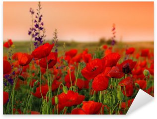 Pixerstick for All Surfaces Field of poppies on a sunset