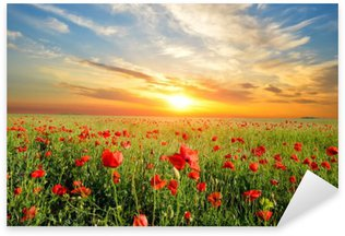field with poppies Sticker - Pixerstick