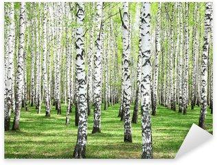 Sticker - Pixerstick First spring greens in birch grove