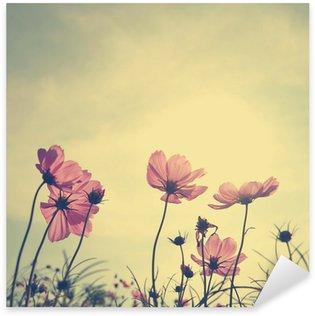 Sticker Pixerstick Fleurs de cosmos de cru dans le temps de coucher du soleil