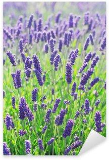 Sticker Pixerstick Fleurs de lavande en fleurs dans un champ