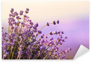 Sticker Pixerstick Fleurs de lavande fleurissent l'heure d'été
