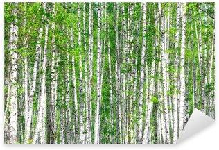 Sticker Pixerstick Forêt de bouleaux. Mai