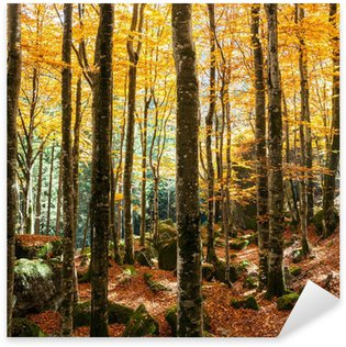 Sticker Pixerstick Forêt de hêtres en automne