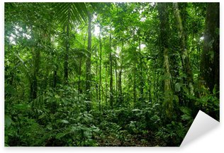 Sticker Pixerstick Forêt tropicale Paysage, Amazon