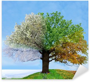 Four season tree Sticker - Pixerstick