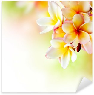 Frangipani Tropical Spa Flower. Plumeria. Border Design Sticker - Pixerstick