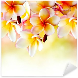 Frangipani Tropical Spa Flower. Plumeria Border Design Sticker - Pixerstick