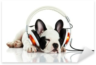 french bulldog with headphone isolated on white background Sticker - Pixerstick