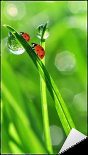 fresh morning dew and ladybirds Sticker - Pixerstick