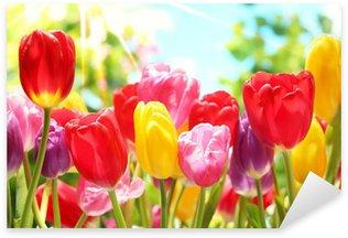 Fresh tulips in warm sunlight Sticker - Pixerstick