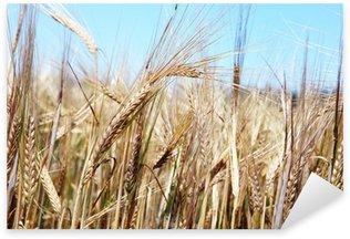 Sticker Pixerstick Grain mûr prêt pour la récolte