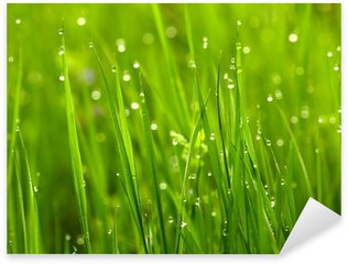 Pixerstick for All Surfaces Green grass with waterdrops