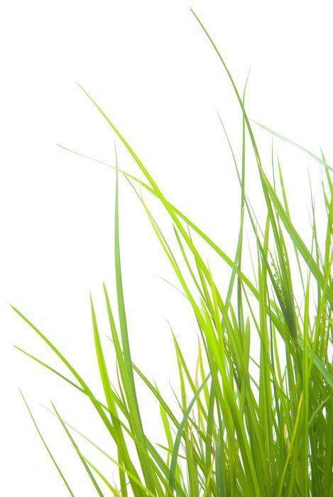 Sticker - Pixerstick Green Grass - Life