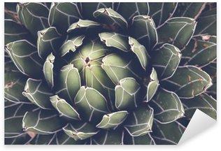 Sticker Pixerstick Gros plan de l'agave plante succulente, mise au point sélective, tonifiant