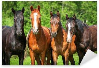 Sticker Pixerstick Groupe de jeunes chevaux sur le pâturage