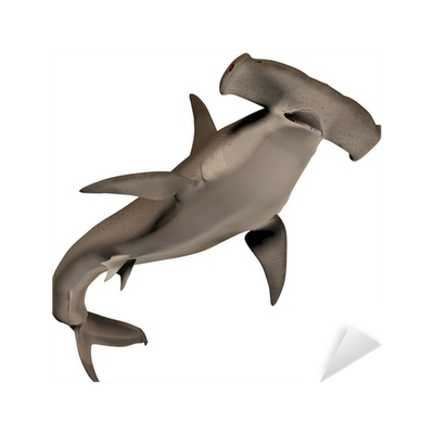Hammerhead Shark Sticker • Pixers® • We live to change