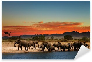 Herd of elephants in african savanna Sticker - Pixerstick
