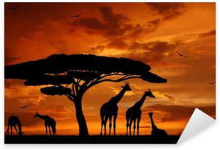 Sticker - Pixerstick herd of giraffes in the setting sun