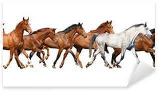 Sticker - Pixerstick Herd of wild horses running isolated on white