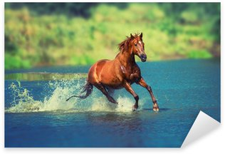 Pixerstick for All Surfaces horse