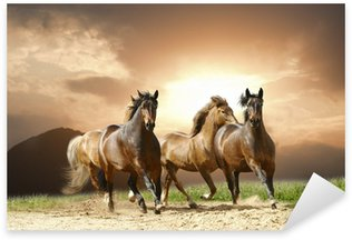 Pixerstick for All Surfaces horses run
