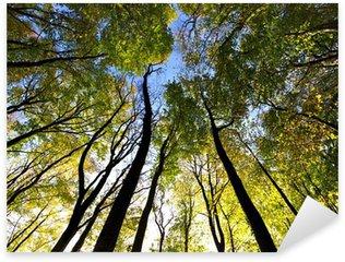 Pixerstick Sticker Kijkend naar de lucht in het bos