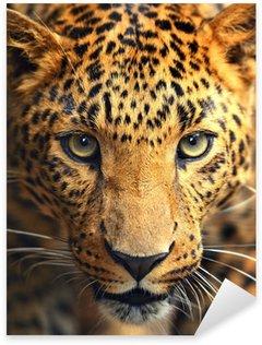 Sticker - Pixerstick Leopard portrait