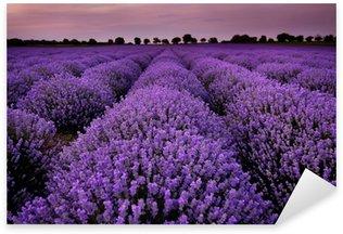 Sticker Pixerstick Les champs de lavande au coucher du soleil