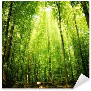 Sticker Pixerstick Les rayons du soleil dans la forêt de hêtres