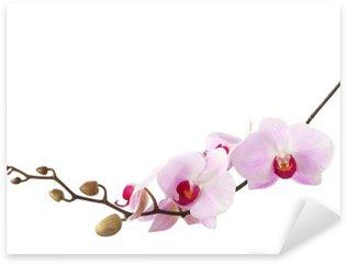 Sticker Pixerstick Lumière orchidée rose isolé sur blanc