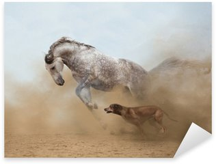 Pixerstick for All Surfaces Lusitanian horse