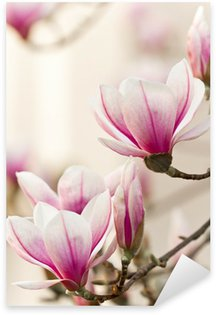 Magnolie, Magnolia Sticker - Pixerstick