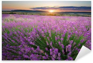 Pixerstick for All Surfaces Meadow of lavender