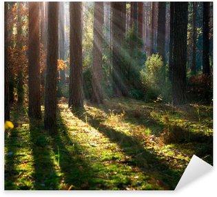 Sticker Pixerstick Misty Vieille Forêt. Autumn Woods