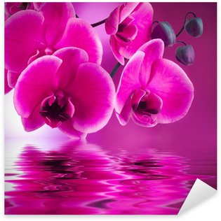 Pixerstick for All Surfaces natural floral background, spa concept