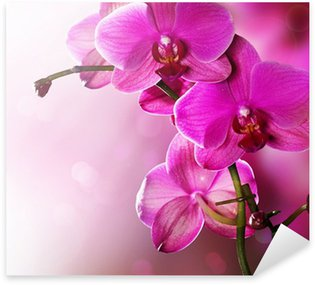 Orchid Flower border design Sticker - Pixerstick