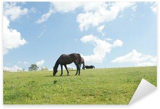 Pixerstick Sticker Paarden op de weide in de buurt van Lednice, Tsjechië