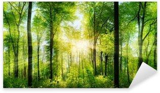 Sticker Pixerstick Panorama de la forêt avec des rayons de soleil