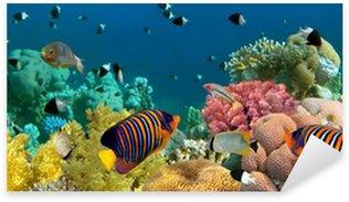 Sticker Pixerstick Panorama sous-marin avec les poissons ange, récifs coralliens et les poissons. Rouge