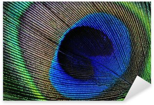 Pixerstick for All Surfaces Peacock feather detail