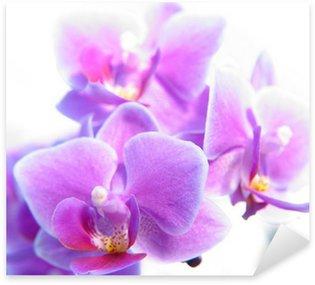 Sticker Pixerstick Phalaenopsis