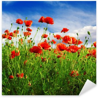 Pixerstick for All Surfaces poppies on green field