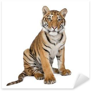 Sticker Pixerstick Portrait de Tigre du Bengale, 1 an, assis, tourné en studio, Pant