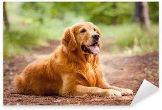 Portrait of a dog Sticker - Pixerstick