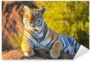 Sticker - Pixerstick Portrait of a Tiger