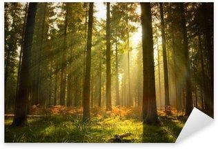 Pixerstick Sticker Prachtig boslandschap
