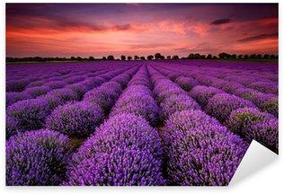 Pixerstick Sticker Prachtig landschap met lavendel veld bij zonsondergang