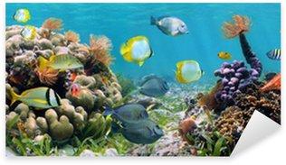 Sticker Pixerstick Récif panoramique